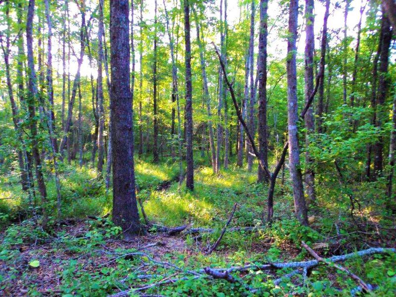 Alexander Munnerlyn Tract : Waynesboro : Burke County : Georgia