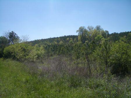 112 Acres Ward Mountain Road : Adairsville : Bartow County : Georgia