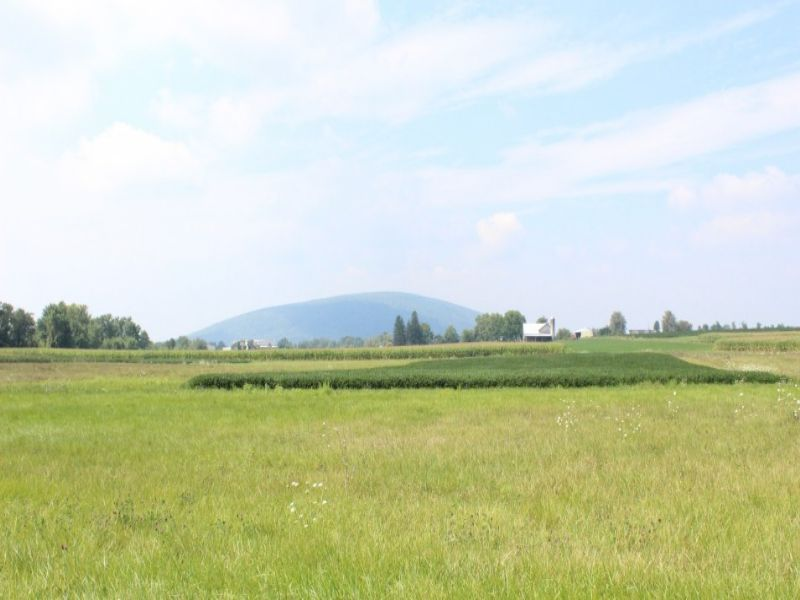 140+/- Acres Of Prime Farm Land : Muncy : Lycoming County : Pennsylvania