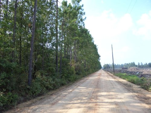20 Acres On Roger Break Rd : Jesup : Wayne County : Georgia