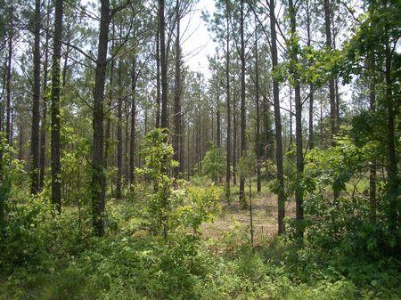 70 Acres Tom Jones Road : Kingston : Bartow County : Georgia