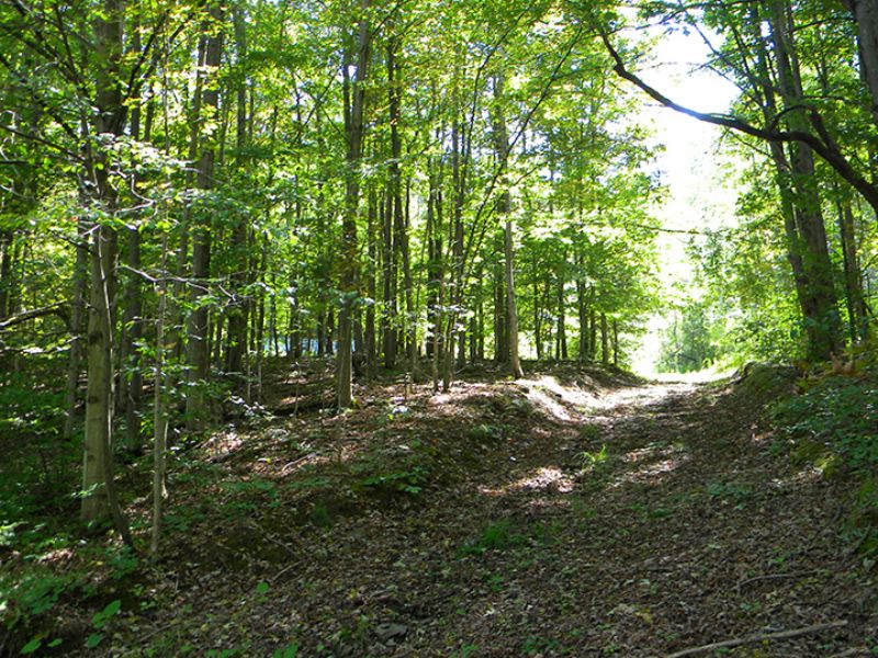 21 Acres Borders State Forest : Orange : Schuyler County : New York