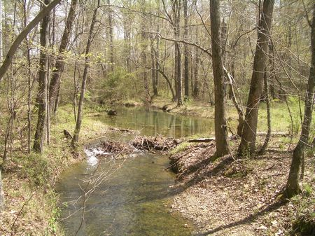 54 Acres Beautiful Creek Frontage : Adairsville : Bartow County : Georgia