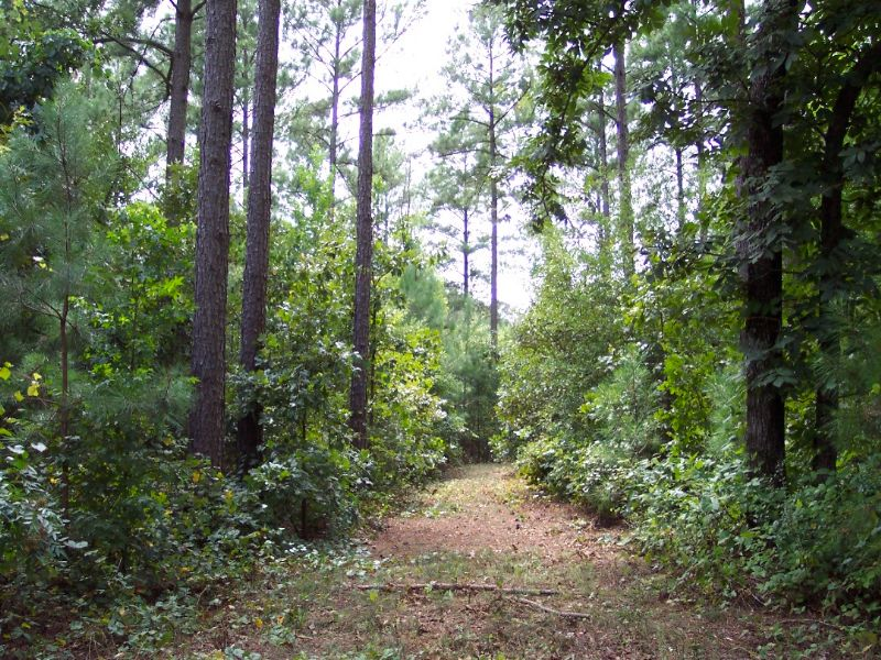 56.4 Wooded Acres : Taylorsville : Bartow County : Georgia