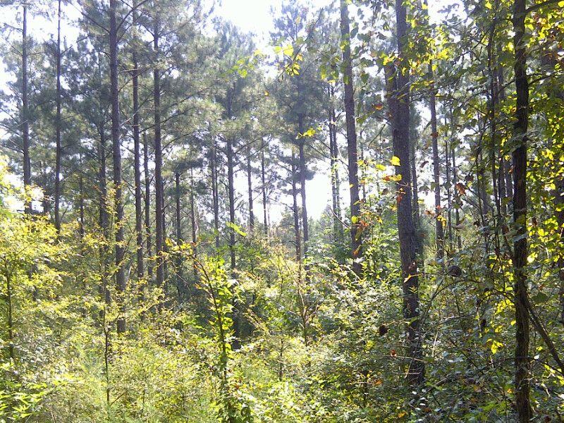 Recreational Land Near Athens : Carlton : Madison County : Georgia
