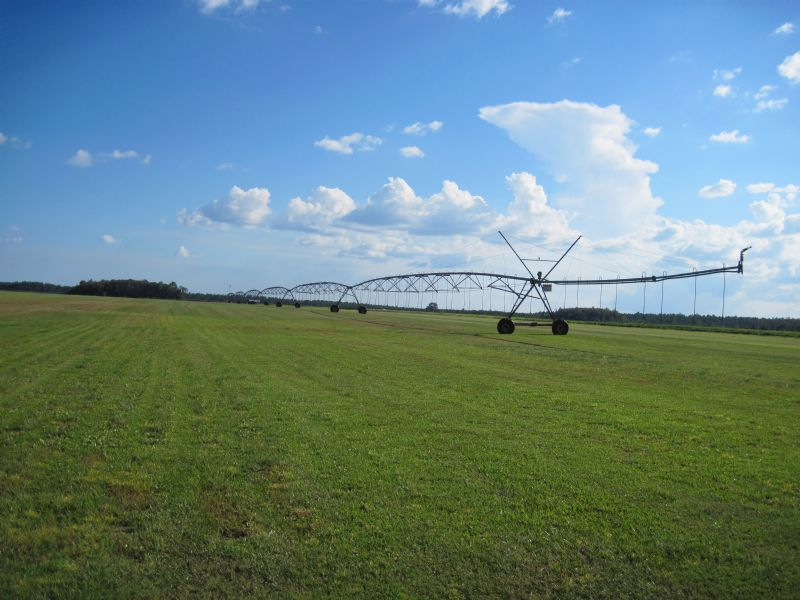 Jmd Farms : Kinard : Calhoun County : Florida