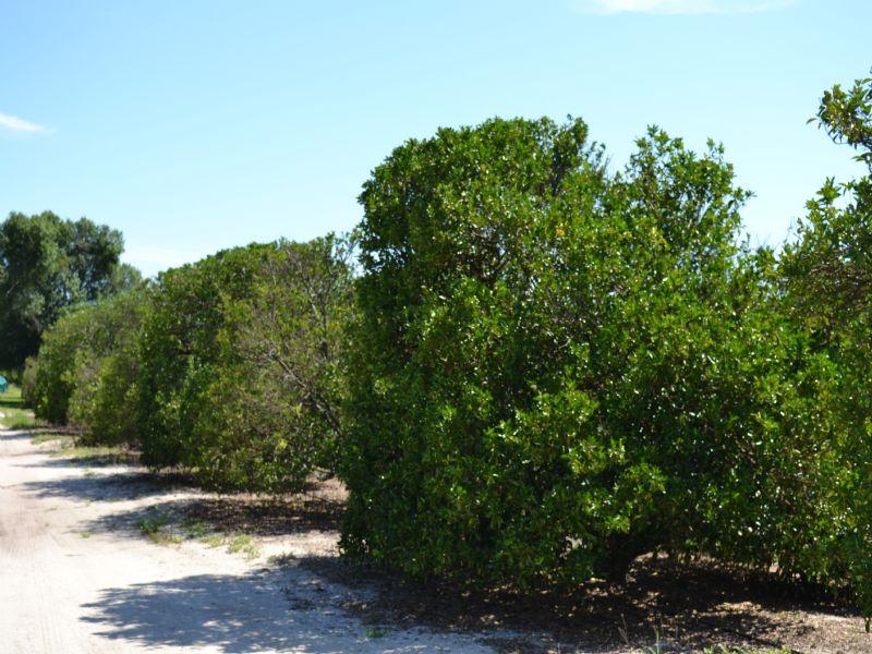 Perch Lake Road Grove : Bartow : Polk County : Florida