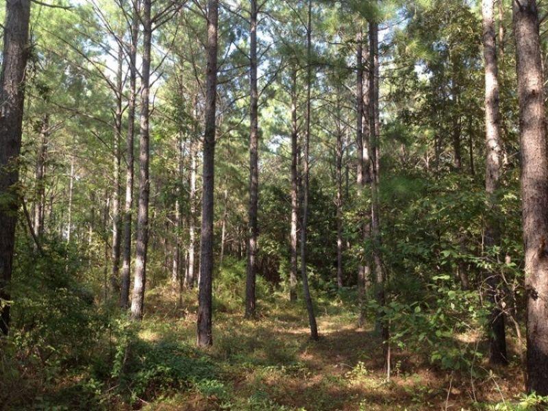 Deason Tract 1 : Maplesville : Chilton County : Alabama