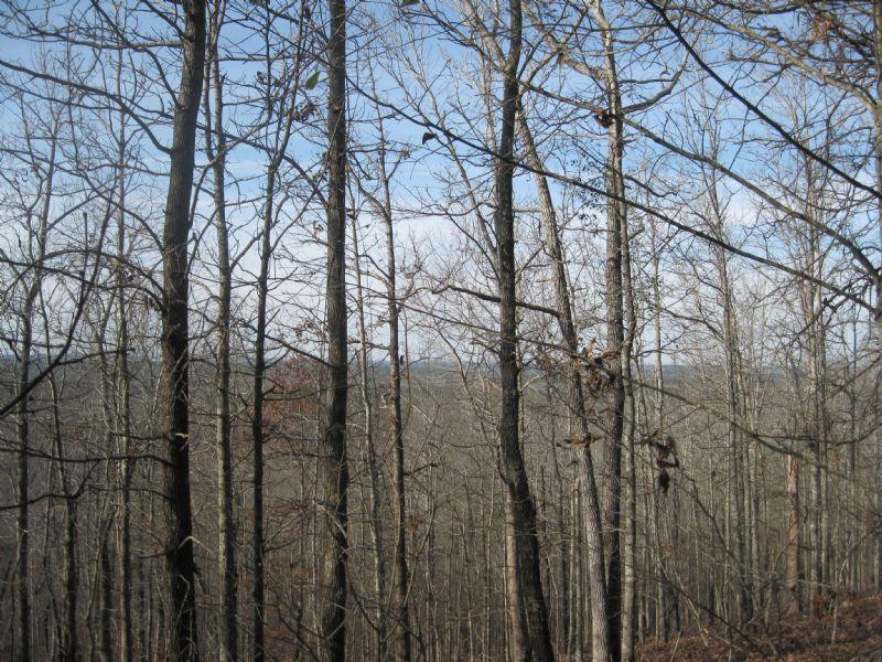 North Glory Southeast : Lumpkin : Stewart County : Georgia