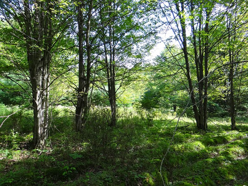 12 Acres Surrounded By State Land : Mcdonough : Chenango County : New York