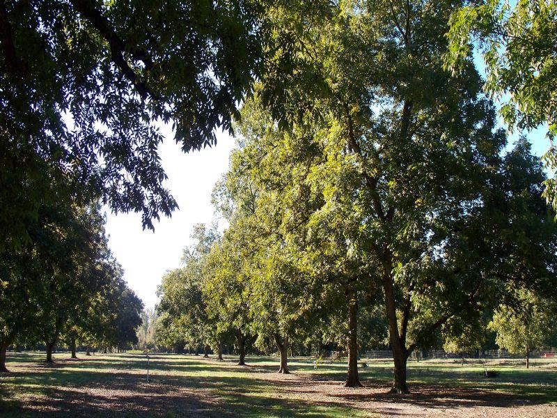 766 Acre Frederick Plantation : Marshallville : Macon County : Georgia