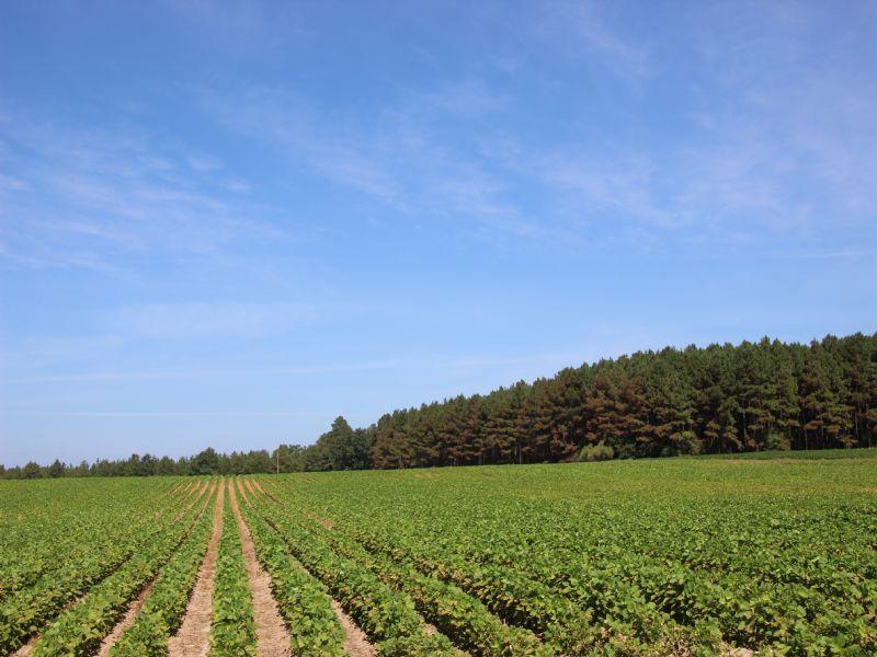 Croom Farm : Laurinburg : Scotland County : North Carolina