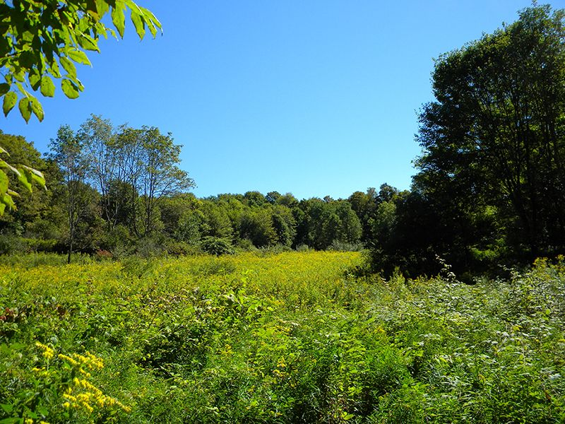 58 Acres Marketable Timber Hunting : Virgil : Cortland County : New York