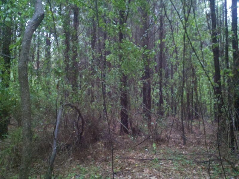 22021sa014 Hi Lo : Grayson : Caldwell Parish : Louisiana