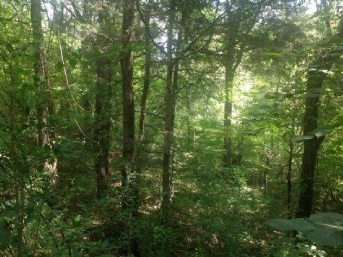 Mahan Creek Homesite : Brierfield : Bibb County : Alabama