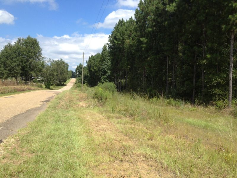 Timber Investment : Tylertown : Walthall County : Mississippi
