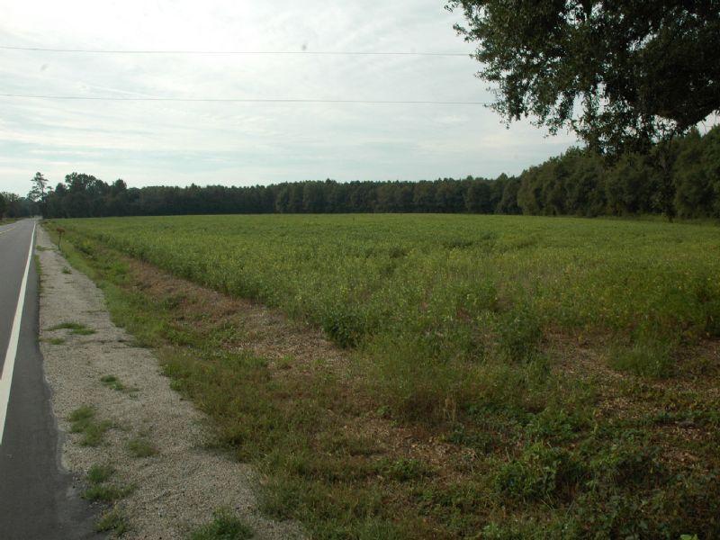Farm : Fairmont : Robeson County : North Carolina