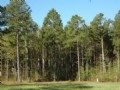 Timber-residential Investment Prop