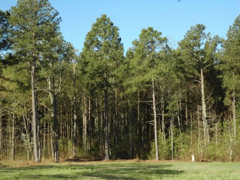 Timber-residential Investment Prop : Lumberton : Robeson County : North Carolina