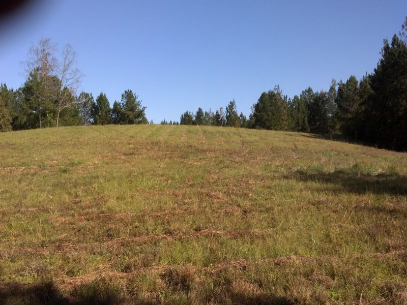Whatley #1 Tract : Ashland : Clay County : Alabama
