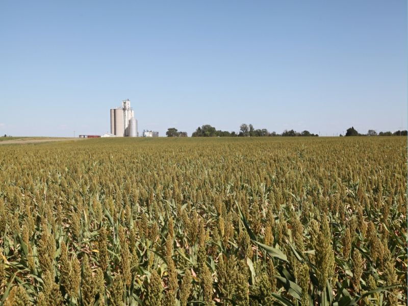 Victor/clara Meyer Dryland Auction : Goodland : Sherman County : Kansas