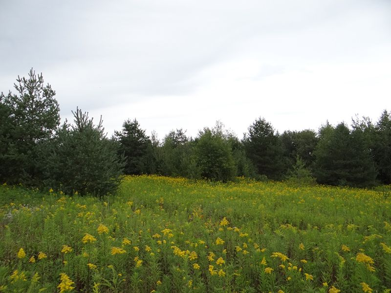 20 Acres Private Woods Electric : Richford : Tioga County : New York