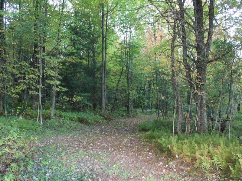 87 Acres Borders State Forest : Floyd : Oneida County : New York