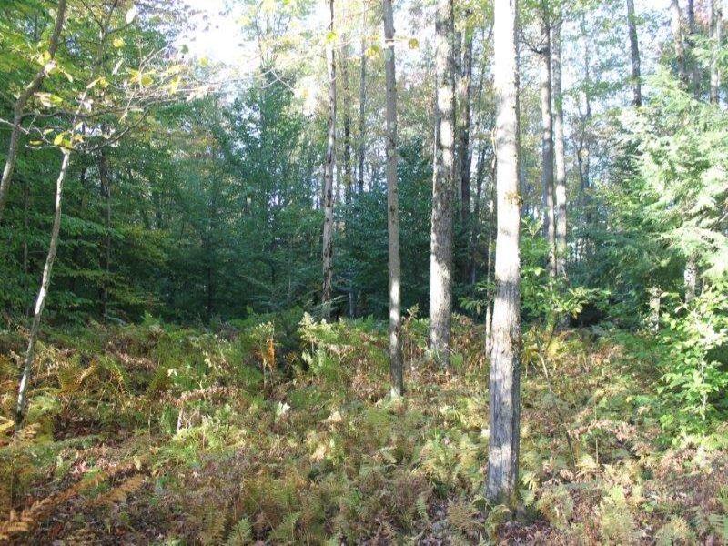 5 Acres Bordering State Forest : Annsville : Oneida County : New York