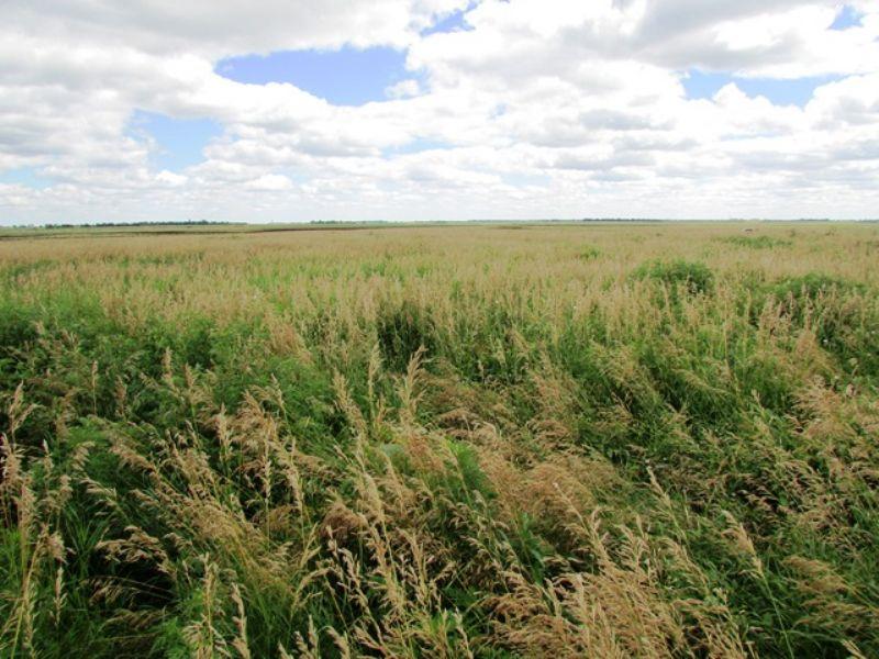 142 Acre Land : Stickney : Aurora County : South Dakota