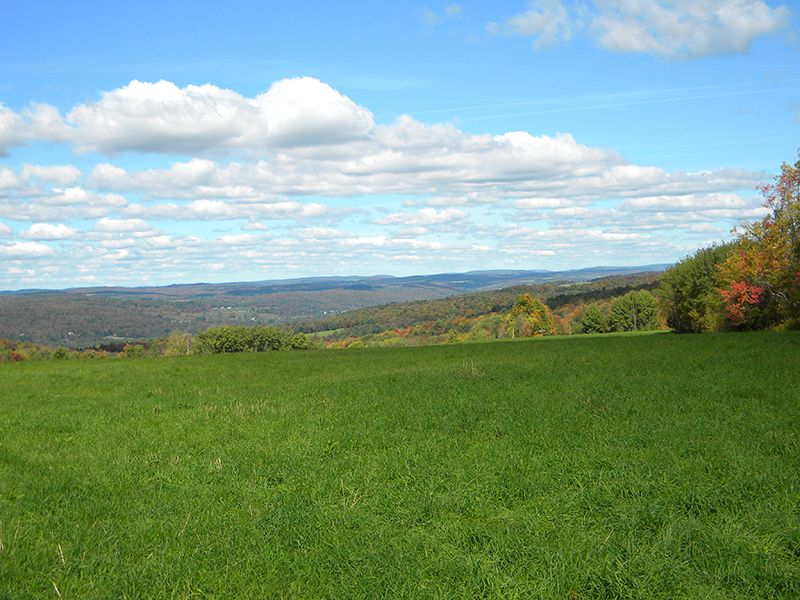 94 Acres Farmland Mineral Rights : Willet : Cortland County : New York
