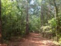 30+/- Acres Beautiful Hardwoods