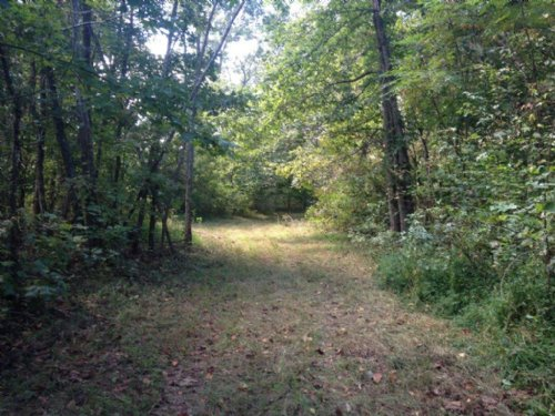 156+/- Acres Usable Hunting Land : New Hope : Marion County : Tennessee