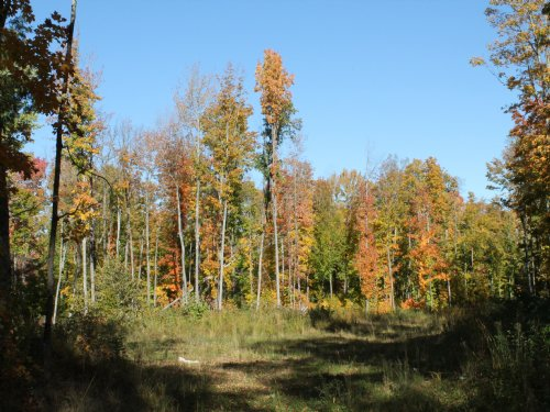 Tbd Woods Road  Mls#1073975 : Nisula : Houghton County : Michigan
