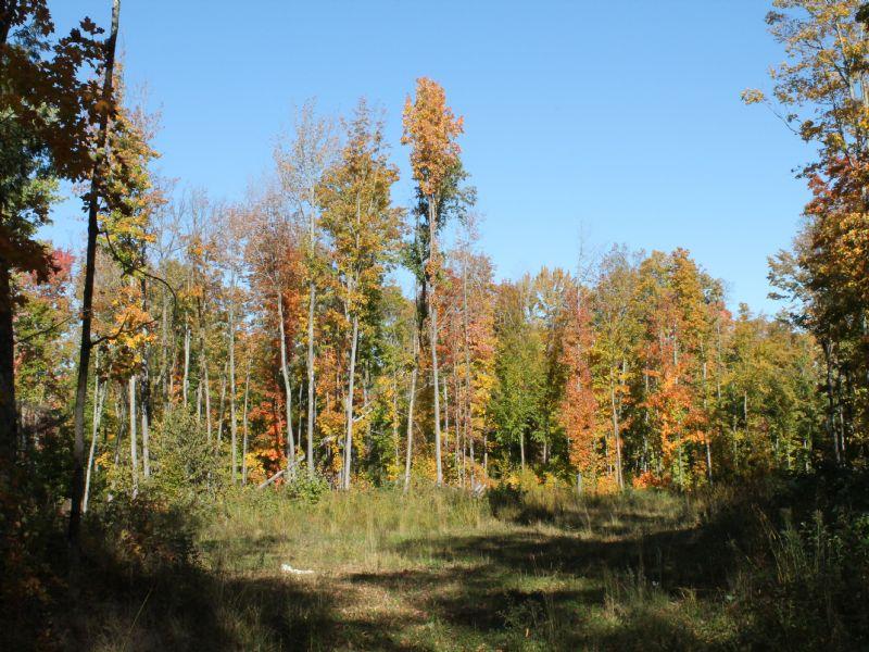 Tbd Woods Road  Mls#1073975 : Nisula : Houghton County : Michigan