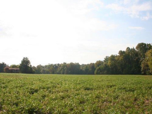 44 Acres Off Edgar Rd : Ruther Glen : Caroline County : Virginia