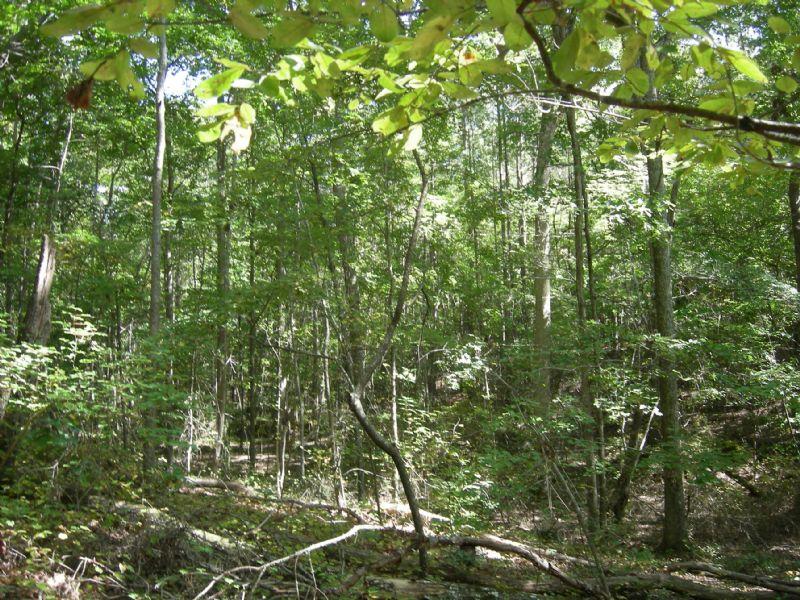 Rolling Land Off The Beaten Path : Cartersville : Bartow County : Georgia