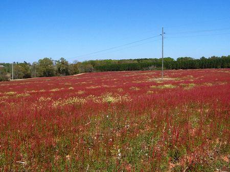 Hartford Farm : Hartford : Geneva County : Alabama