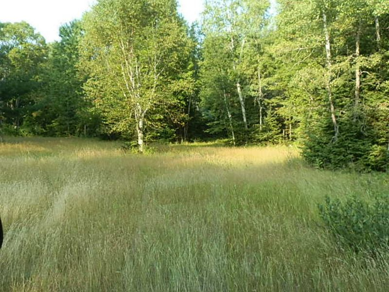40 Ac In Springstead : Sherman : Iron County : Wisconsin