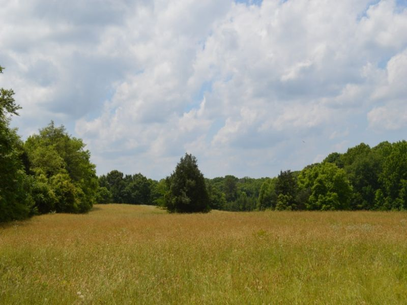 17.70 Acre Non-restricted Tract : Spartanburg : Spartanburg County : South Carolina