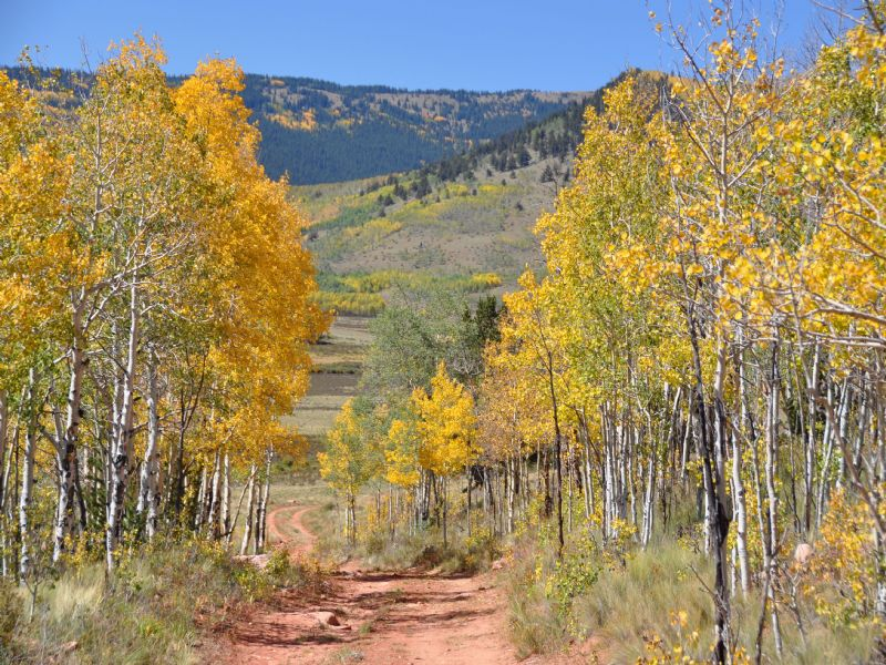 Red Hill Ranch : Fairplay : Park County : Colorado