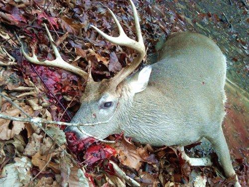 Pine Apple 580 : Pine Apple : Wilcox County : Alabama