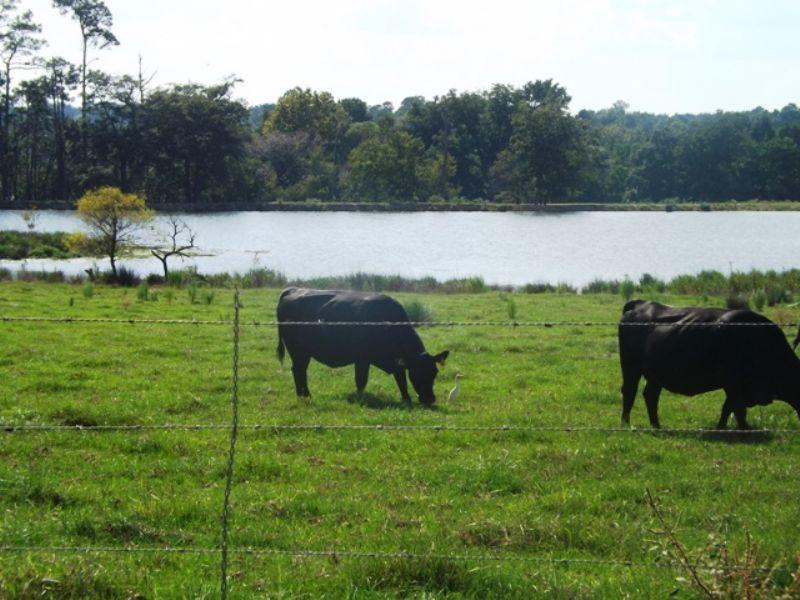 21+/- Acs Smith Healey Farm Tract B : Statesboro : Bulloch County : Georgia