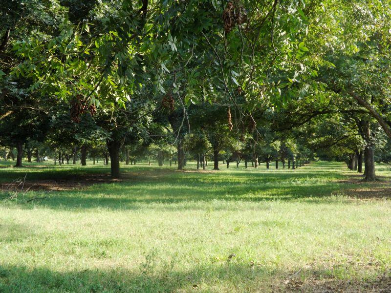 53+/- Acs Smith Healey Farm Tract C : Statesboro : Bulloch County : Georgia