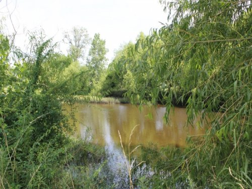 8.25 Acre Mccoy Creek.terms $330/mo : Clarksville : Red River County : Texas