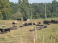 83+/- Acres Cow Lot Tract