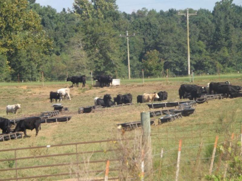 83+/- Acres Cow Lot Tract : Statesboro : Bulloch County : Georgia