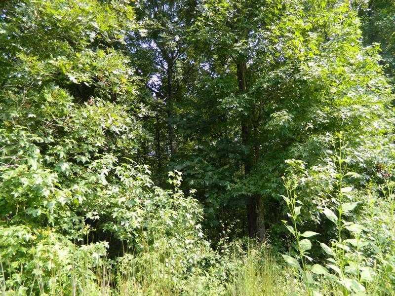 10 Acres With A Creek : Carlton : Oglethorpe County : Georgia