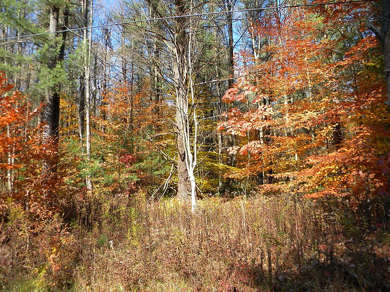 27 Acres Private Wooded Land : Danby : Tompkins County : New York