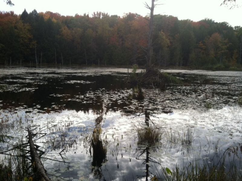 5 Acres Recreational Land Pond : Amboy : Oswego County : New York
