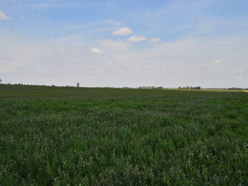 Irrigated Farm : Lamar : Bent County : Colorado